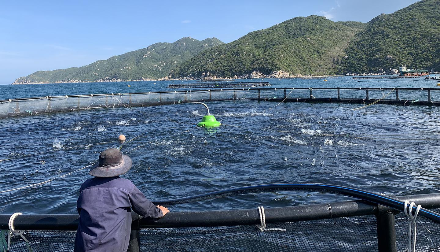 photo, open water fish farm in Vietnam