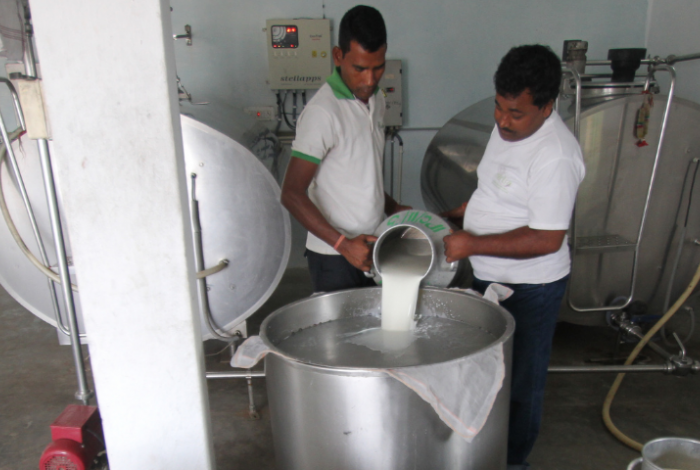 Indian dairy farmers processing milk